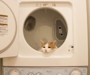 aesthetic, laundry, and cat image