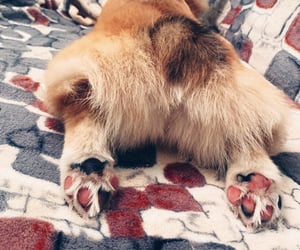 corgi, fun, and paws image