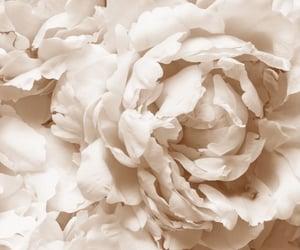 aesthetic, beautiful, and beige image