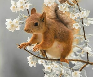 animal, beauty, and flowers image