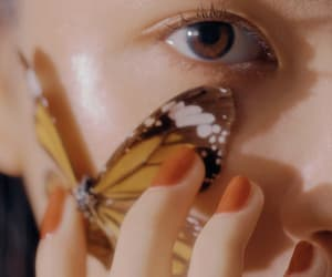 butterfly, details, and eyes image