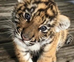 animal, baby, and beauty image