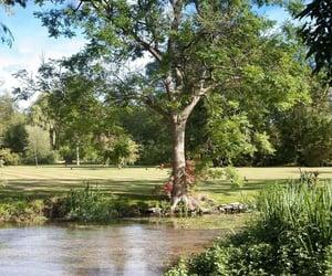 british, garden, and green image