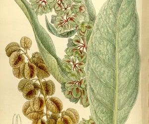 botany, pictorial works, and #hernaturalhistory image