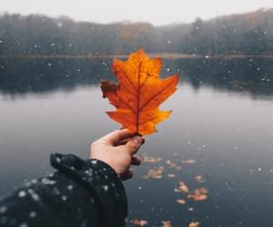 fall, orange, and water image