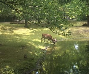 nature, deer, and aesthetic image