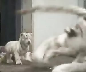 epic, funny video, and animal planet image