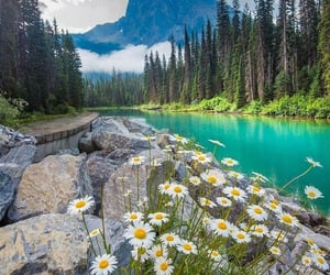 aesthetic, flowers, and lake image