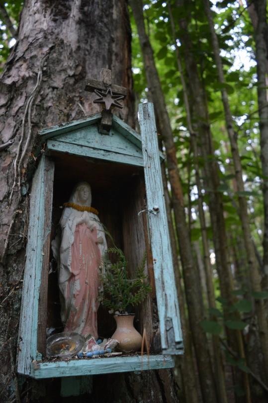 Catholic, forest, and mary image