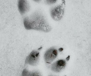 animal, snow, and nature image