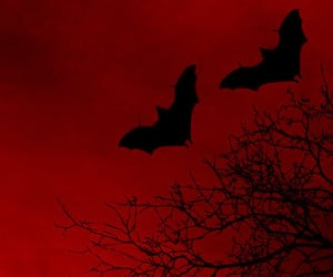 purple, bats, and dark image