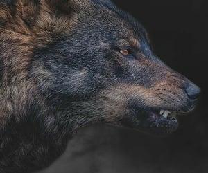 animal, werewolf, and wild image