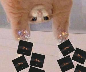 madison, meme, and new album image