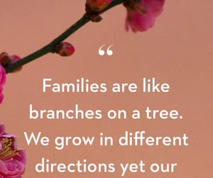 branches, roots, and family image