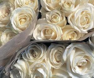 flores, rosas, and belleza image