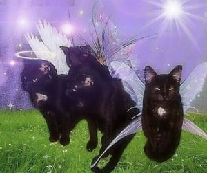 aesthetic, wings, and cats image