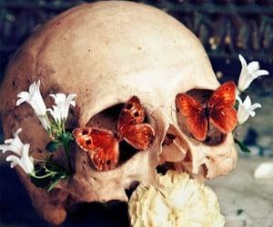 art, blooming, and skulls image