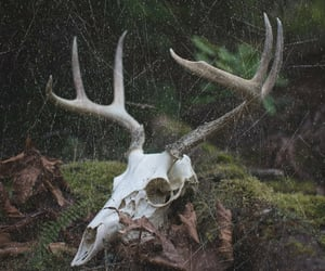 forest, skull, and trees image