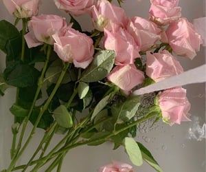 flower, rose, and watering image