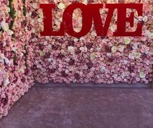 flowers, wrocław, and miłość image