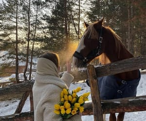 flowers, horse, and winter image