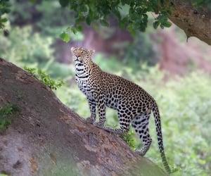 Riverine forest beauty...Shingwedzi,  Kruger National Park by Antoinette Kloppers