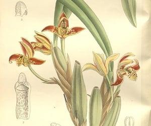 periodicals, botanical illustration, and artist:viaf=48272868 image