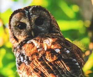 animal, owl, and beautiful image