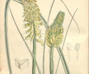 botany, pictorial works, and geo:country=south africa image