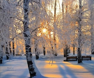 amazing, beauty, and snowy image