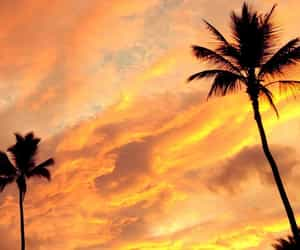 nature, palm trees, and sun image