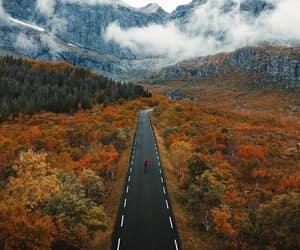 autumn, nature, and way image