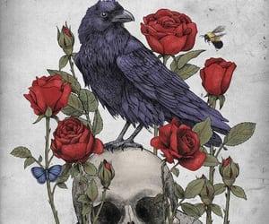 bird, roses, and skull image