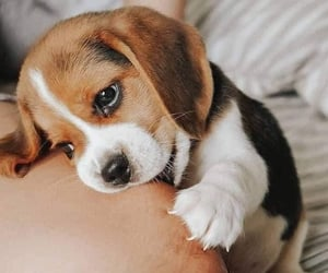 dogs, cute, and animals image