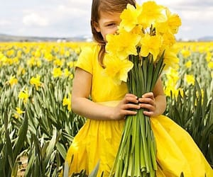 daffodils and spring image
