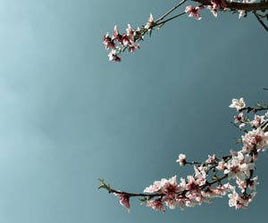 blossom, Greece, and march image