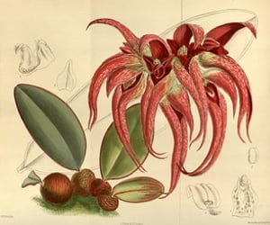 botany, hsa, and pictorial works image