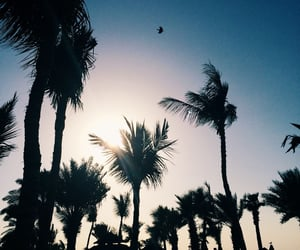 landscapes, natural, and palms image