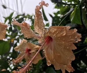 Rain /Flowers