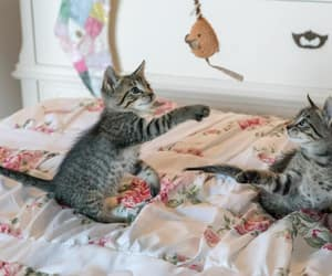 kittens, playing, and website image
