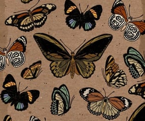 butterfly, naturaleza, and mariposa image