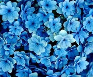 1, blue, and fashion image