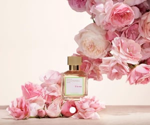 fragrance and roses image