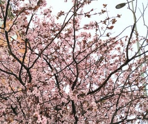 almond blossom, city, and march image