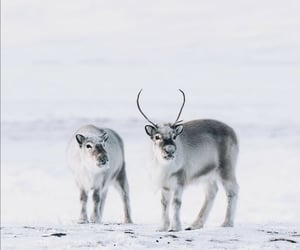 animal, finland, and frozen image