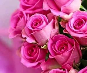 bouquet, flower, and pink rose image