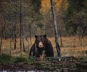 adventure, atumn, and bear image