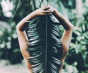 aesthetic, jungle, and tropical image