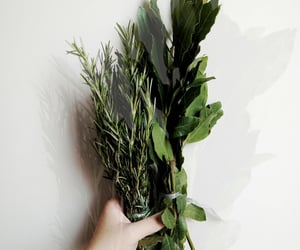 cooking, green, and rosemary image