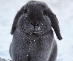 animal, bunny, and aww image